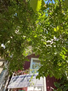 Абхазия частный сектор у моря в Гаграх жилье для отдыха недорого