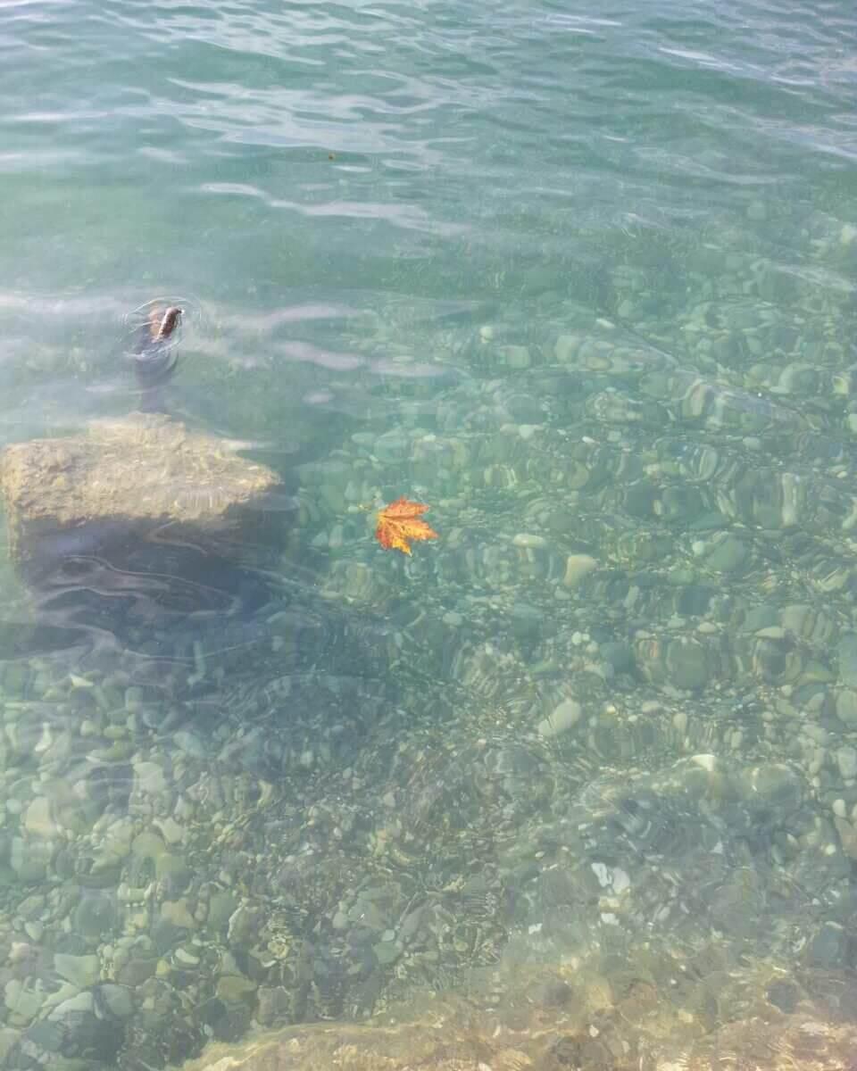 Гагра море рядом с домом