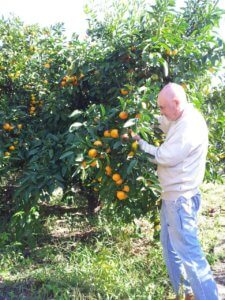 Абхазия зимой мандариновый сезон