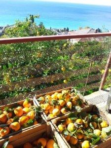 Отдых в Абхазии частный сектор осень в Гаграх