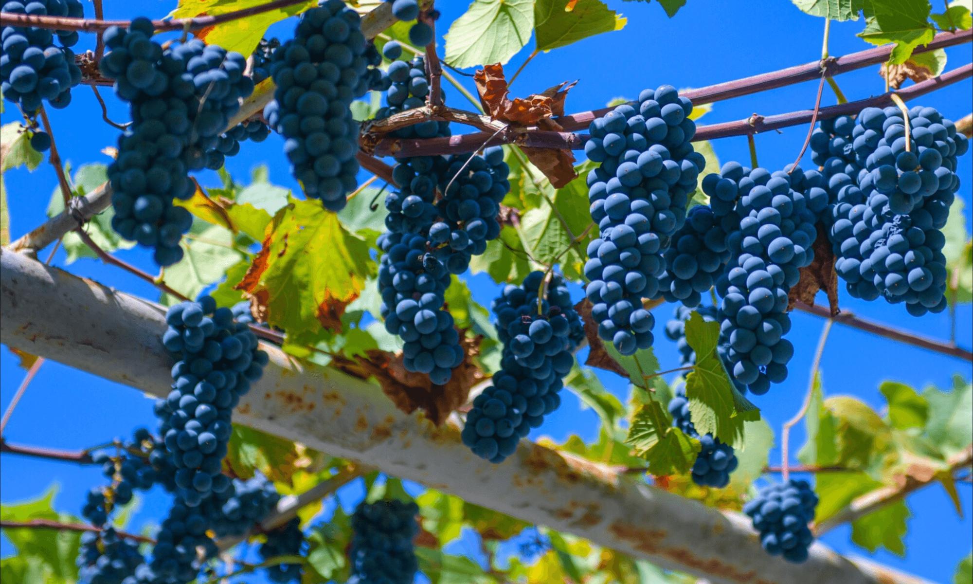Абхазия в октябре